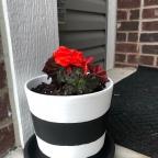 DIY: Painted Terra cotta pots